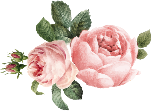 Pink roses with bud and leaves illustration graphic